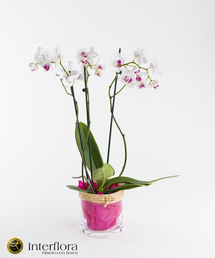 Orquidea domicilio