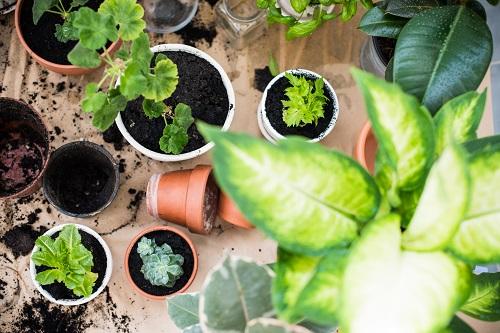plantas naturales en macetas