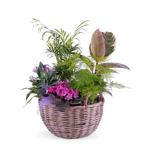 Chamaedorea plantas interior oficina