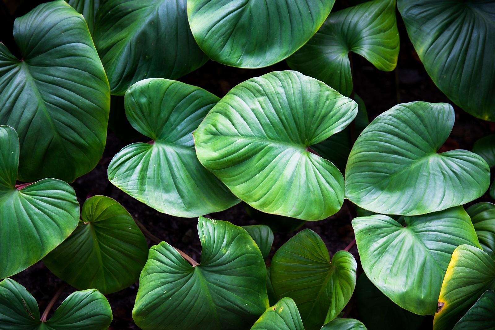 Cuidados para unas plantas de interior perfectas