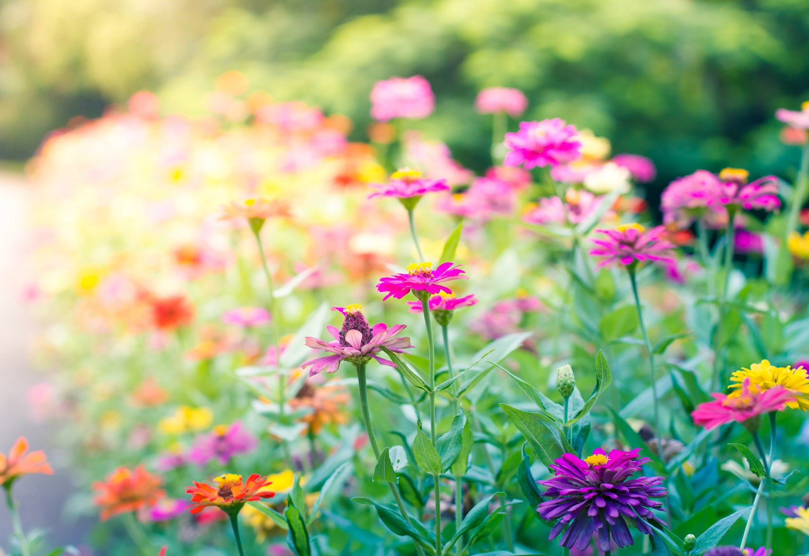 ¿Cuáles son las mejores flores y plantas del verano?