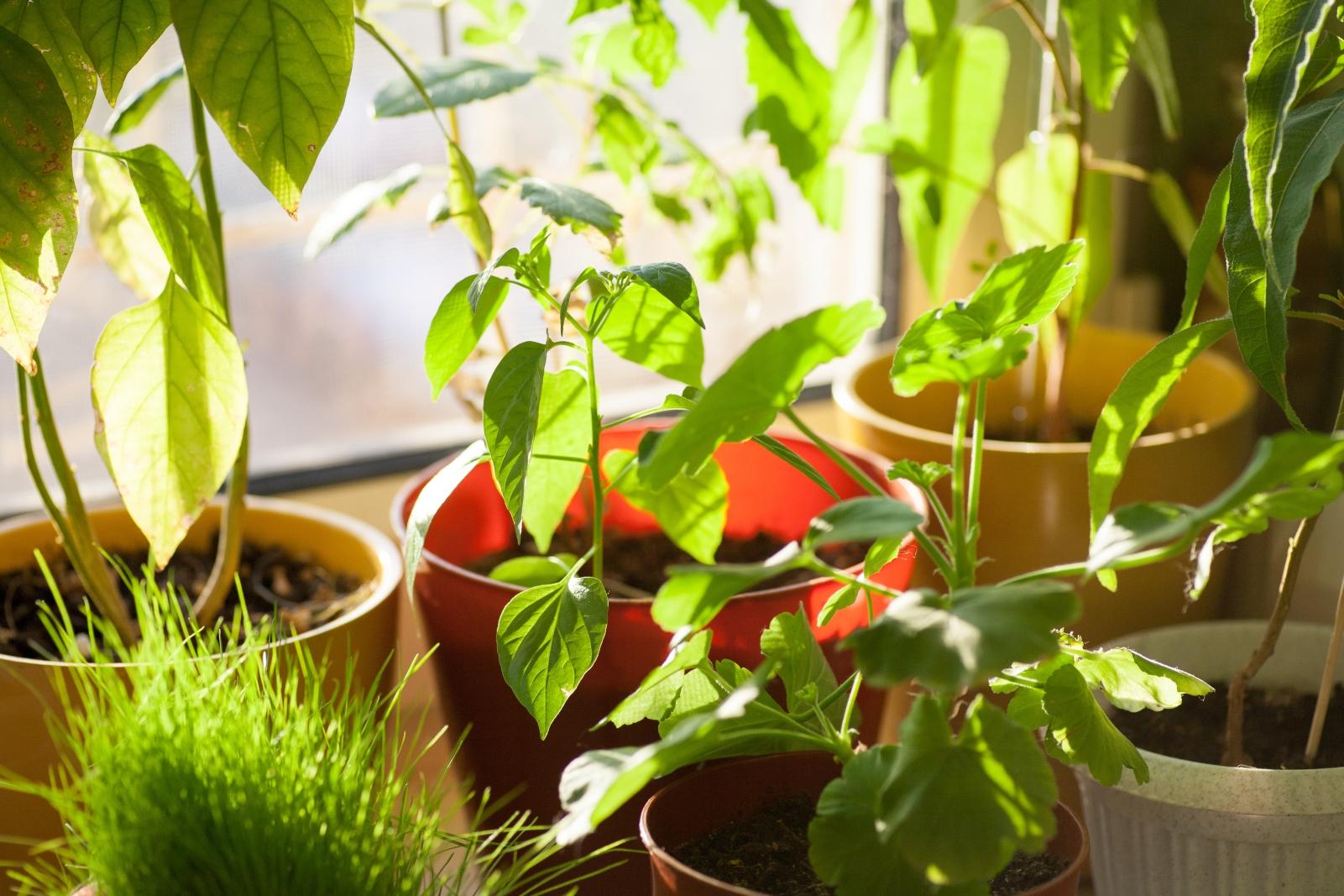 8 plantas resistentes a la terraza y al sol del verano