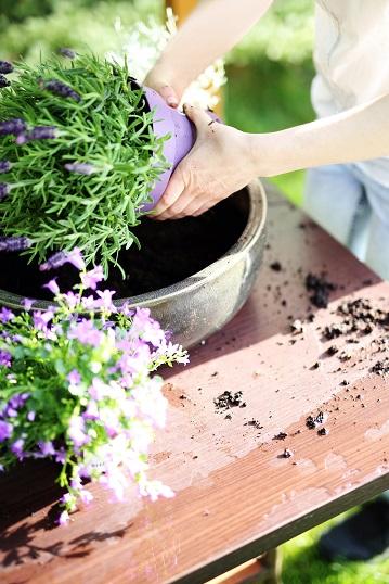 cuidado de plantas en verano