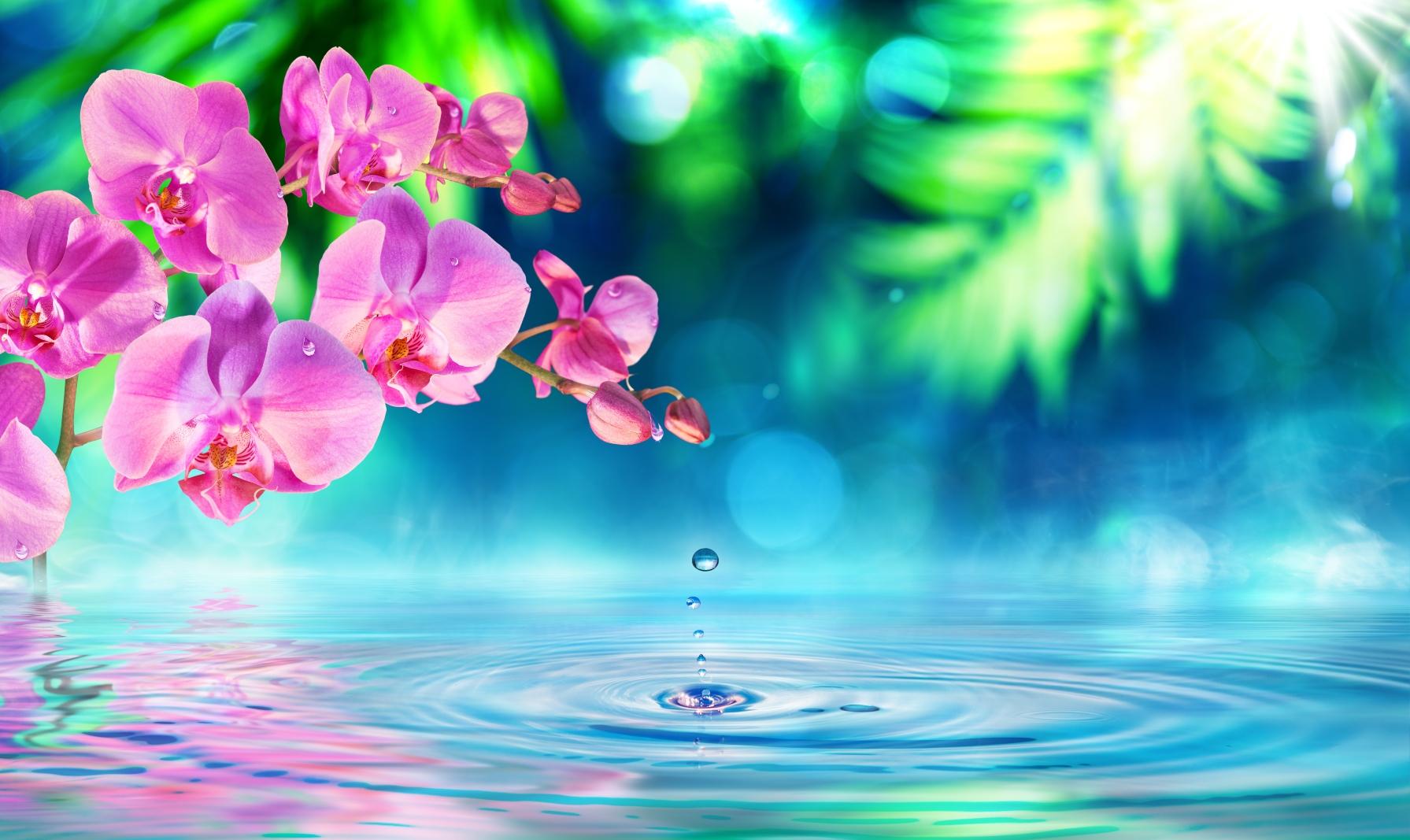 Consejos para cuidar tus flores en verano y mantenerlas frescas en vacaciones