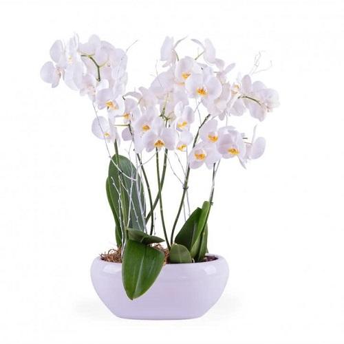 razones_regalar_flores_orquideas