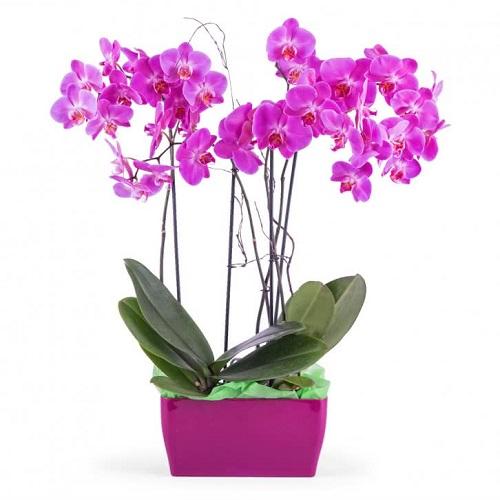 decora_casa_flores_orquidea