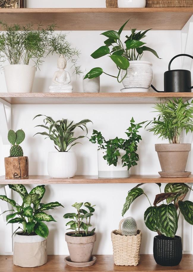 Distintos tipos y materiales de macetas para plantas de interior