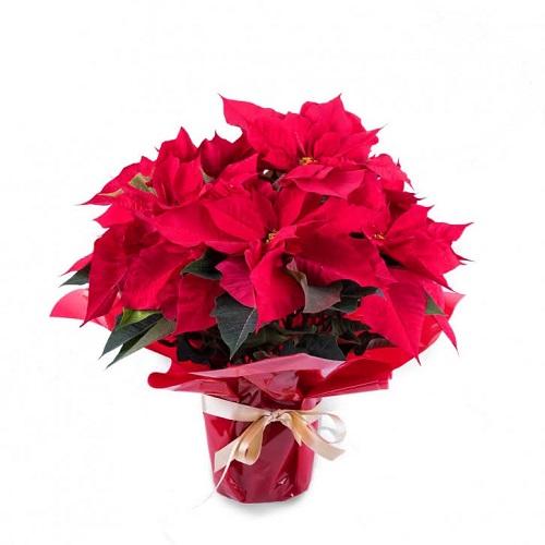 flores_navidad_adornos_caseros