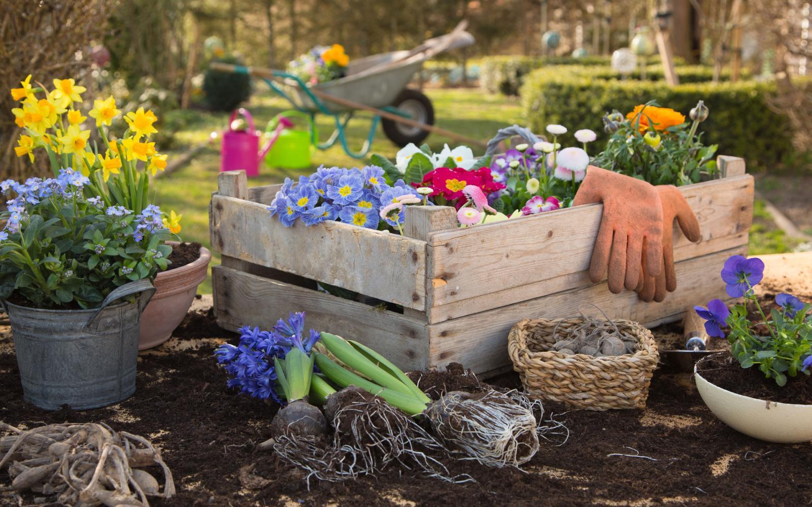 Las plantas en primavera: cuidados básicos