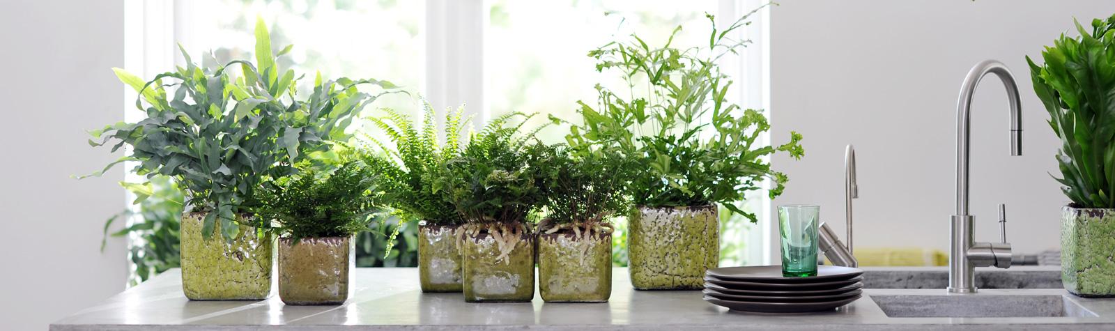 Diez plantas para regalar a un hombre