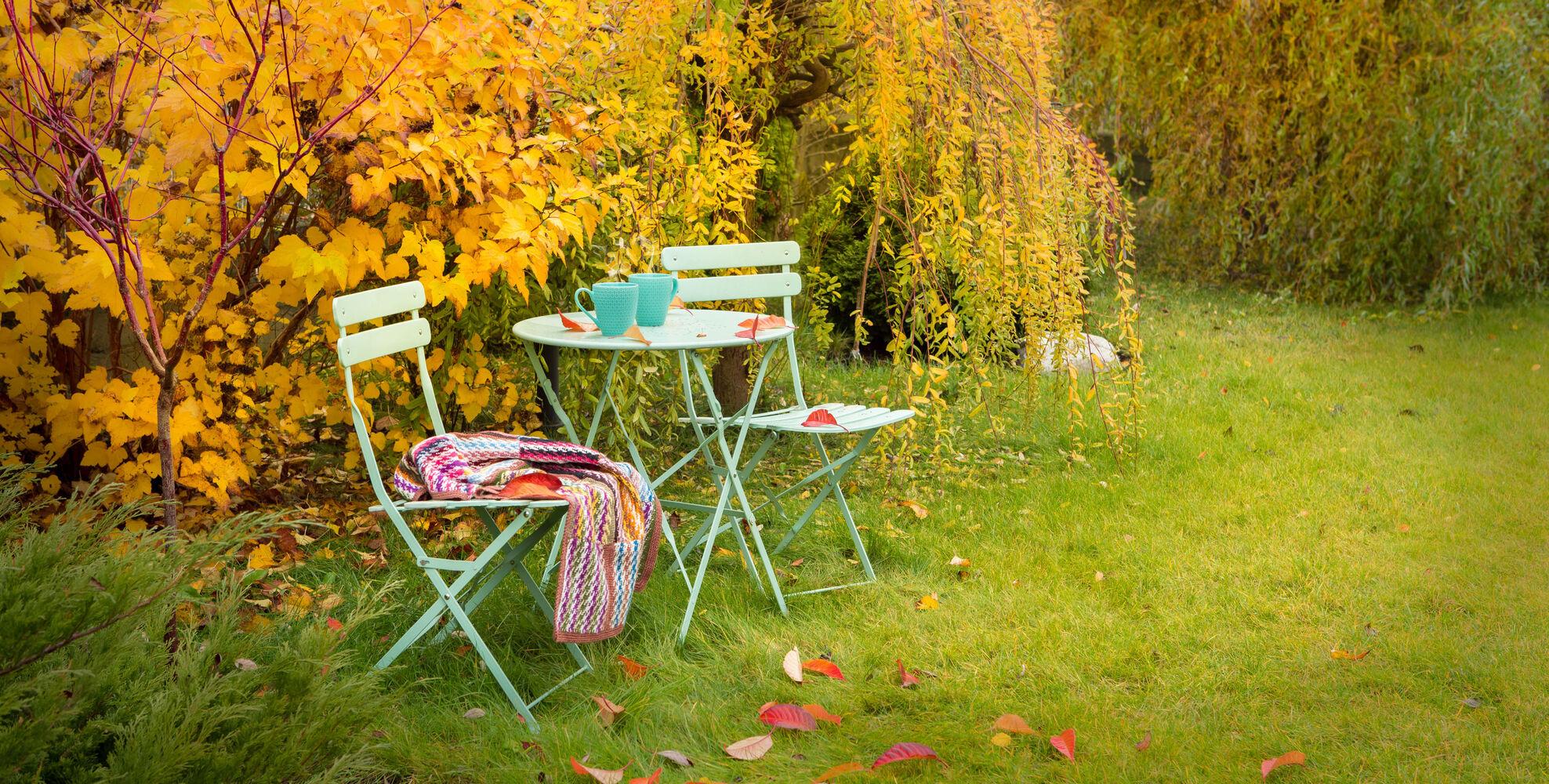 Cómo cuidar tu jardín en otoño