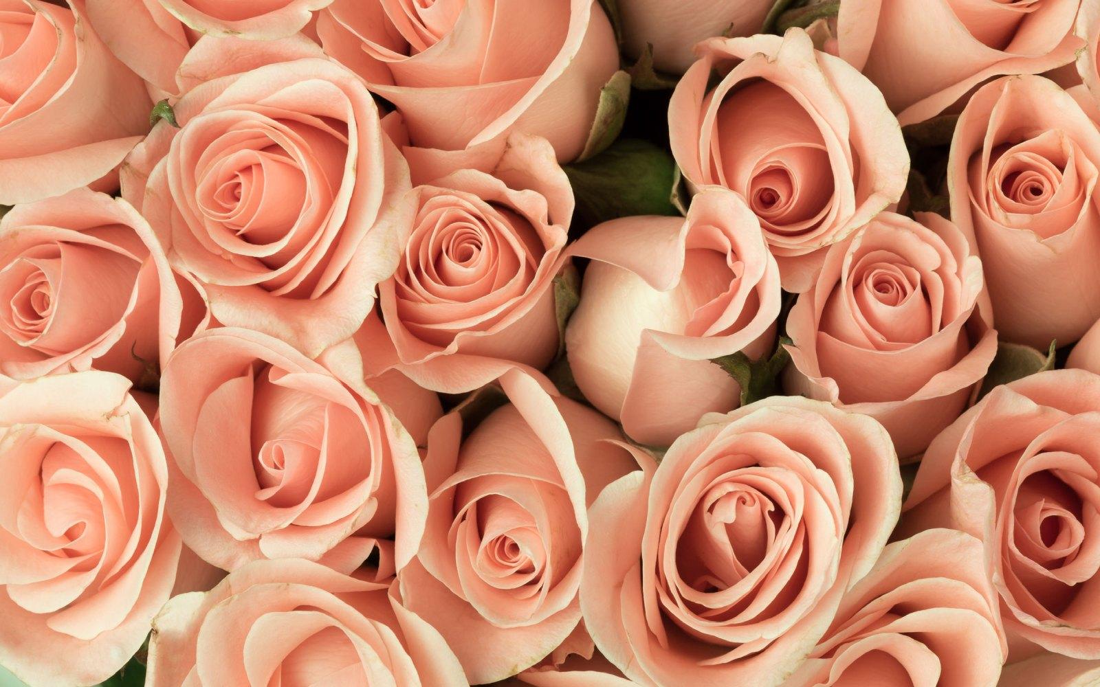 Significado del número de rosas en un ramo