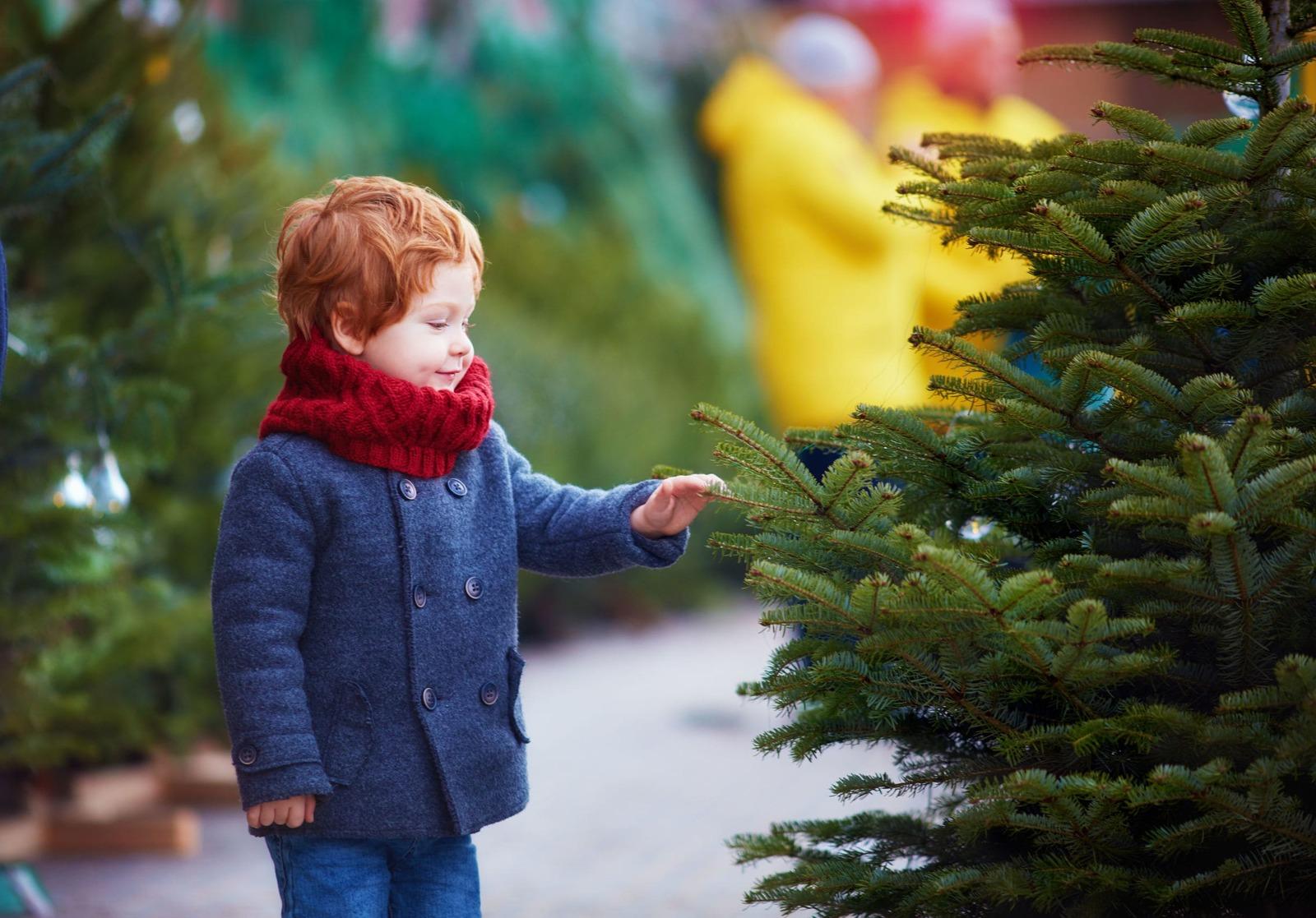 Cómo cuidar tu árbol de Navidad natural
