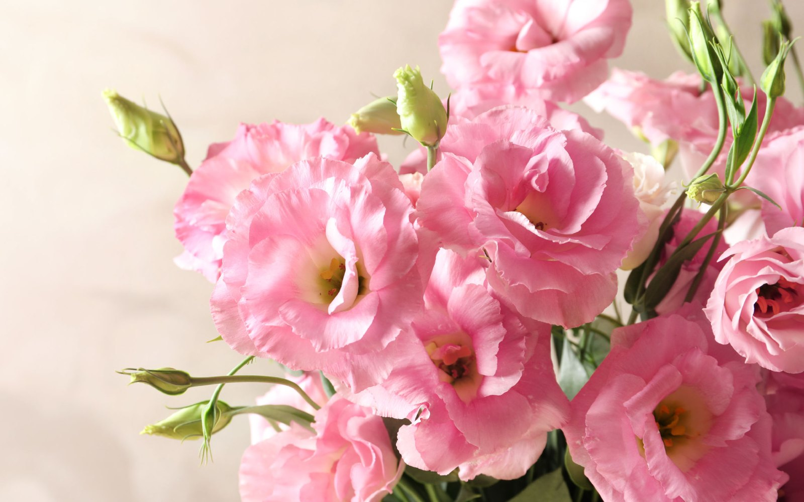 Flores de amor por San Valentín, además de las rosas