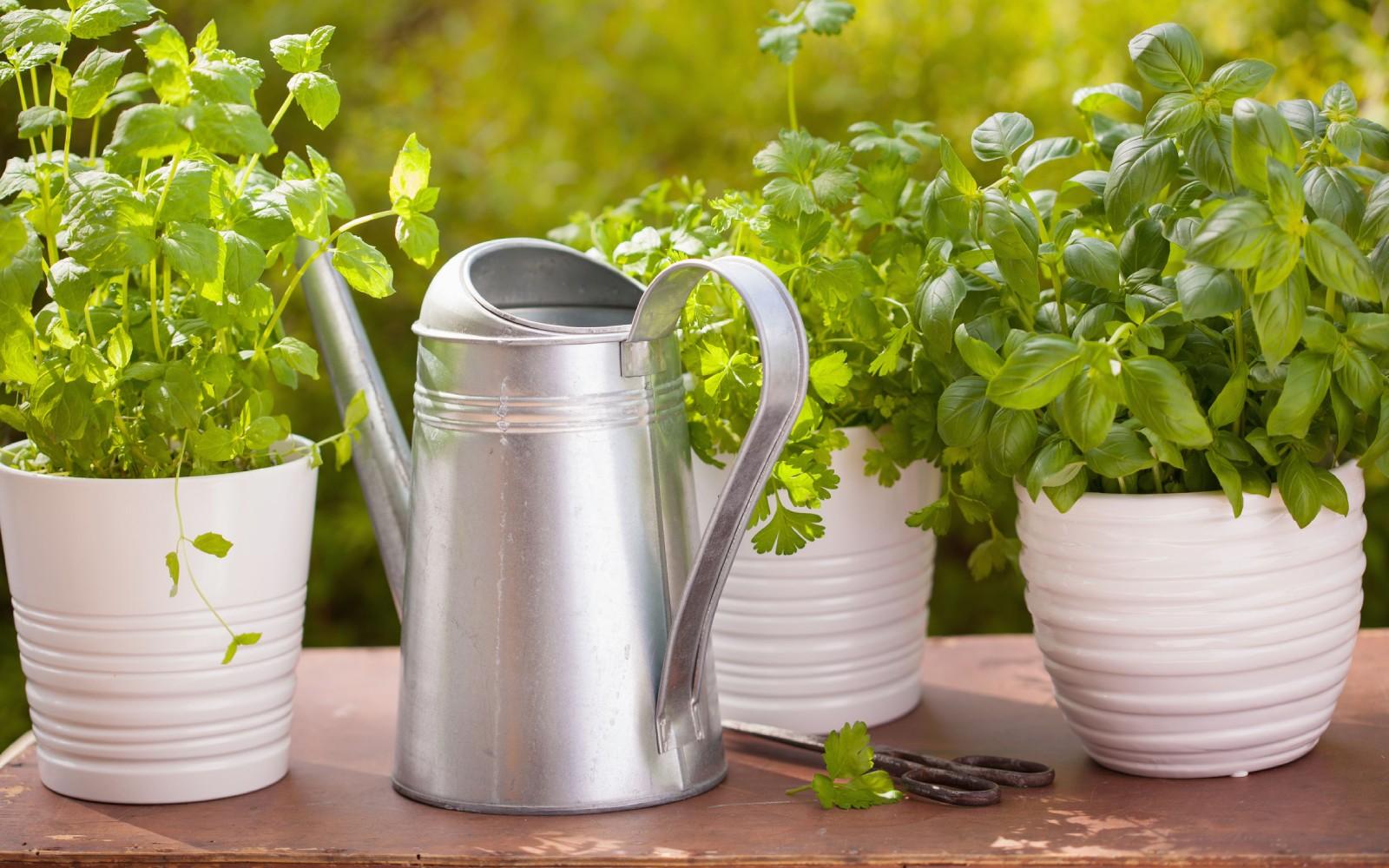 Cómo cultivar plantas aromáticas en interior