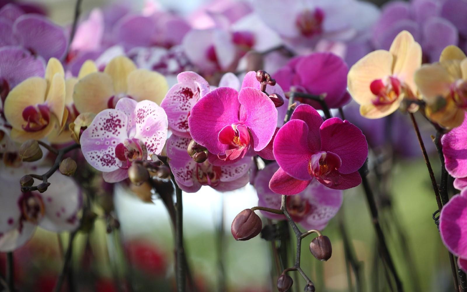 Plantas de invierno con flores para decorar tu casa
