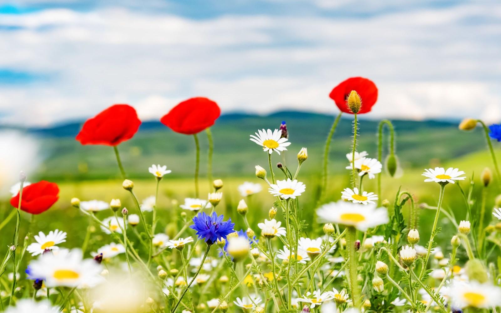 12 flores silvestres para disfrutar de la primavera