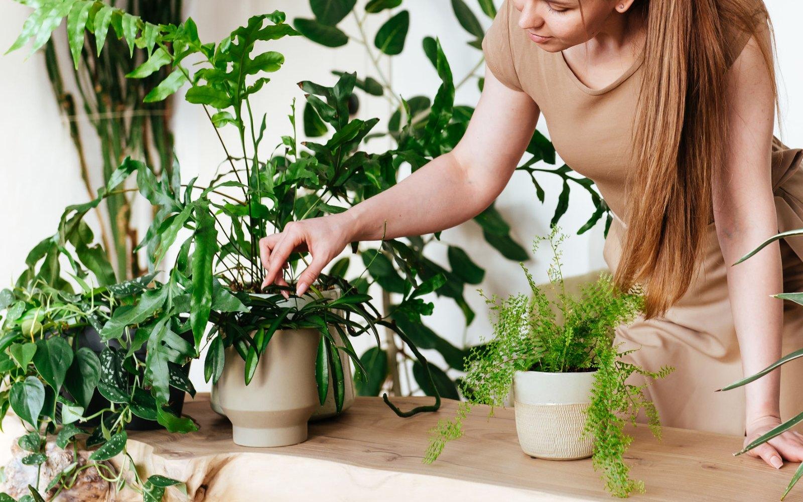 Ideas para tener la naturaleza en casa