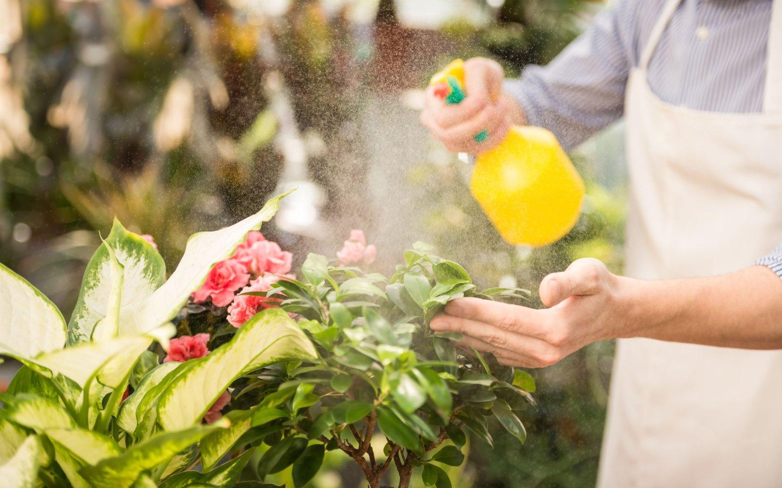 Cómo eliminar plagas en plantas de interior