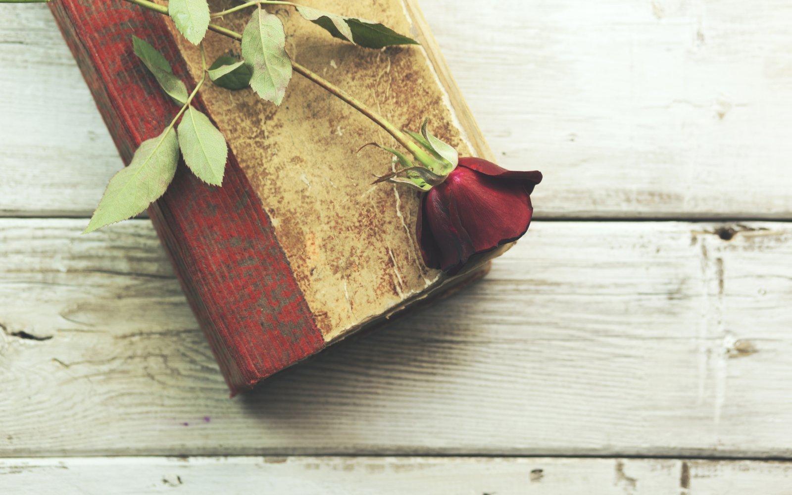 Regala rosas en el Día de Sant Jordi 2021