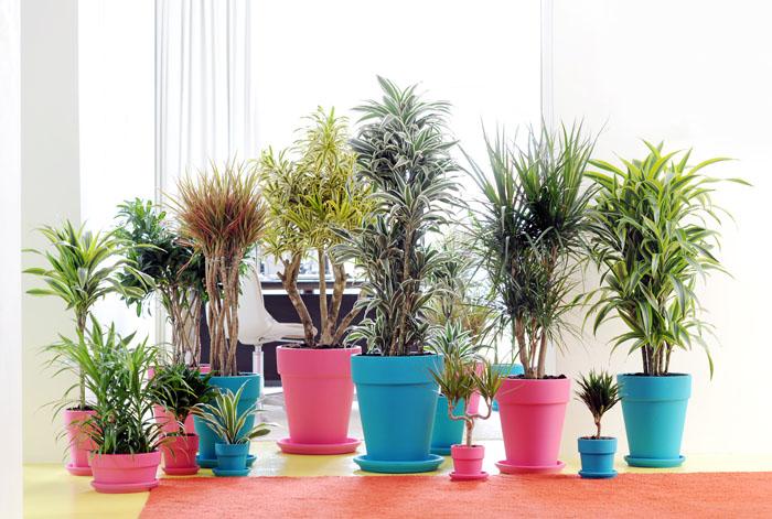 Enviar planta domicilio