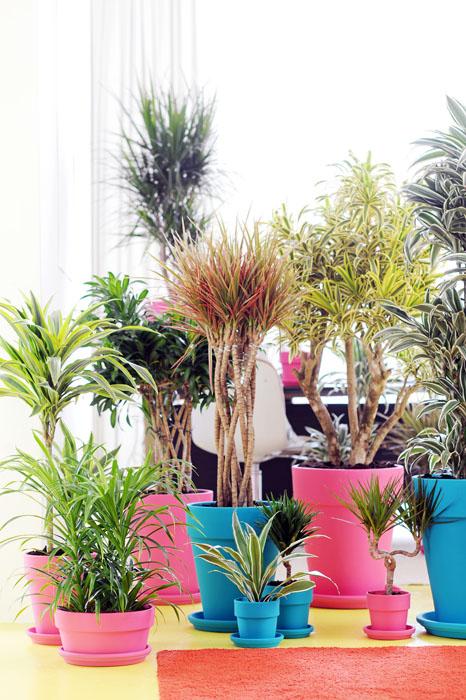 Enviar planta bonita domicilio