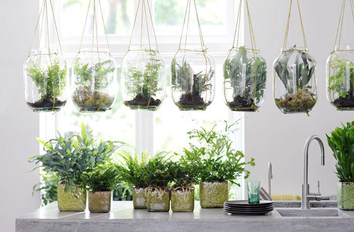 plantas para regalo