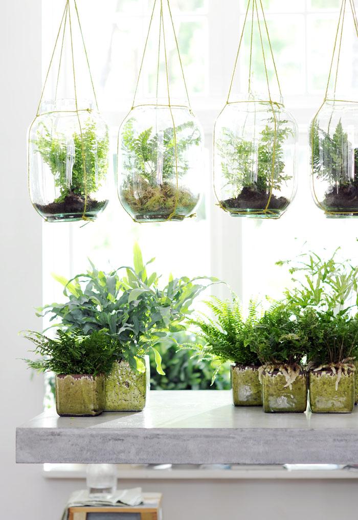 envio de plantas regalo