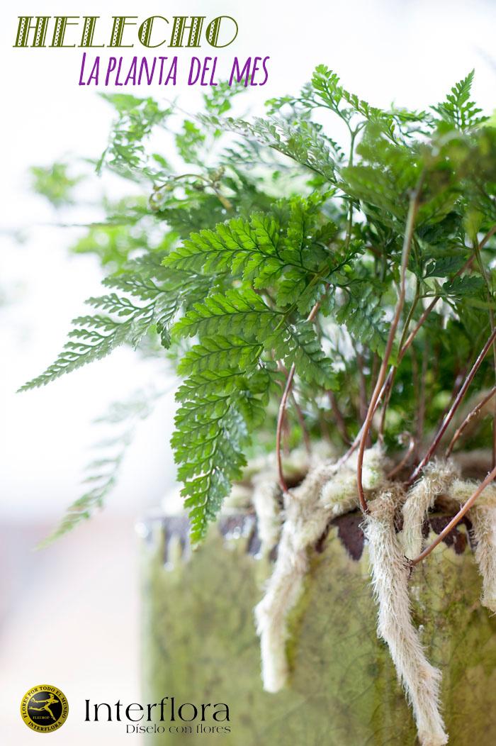 Envio plantas a domicilio