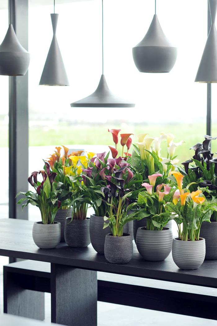 plantas envío domicilio