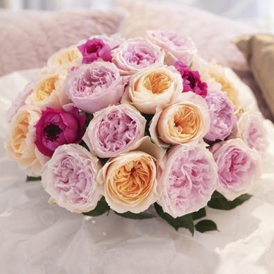Las rosas del señor Austin - Interflora