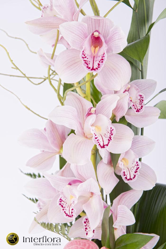 Enviar orquideas domicilio