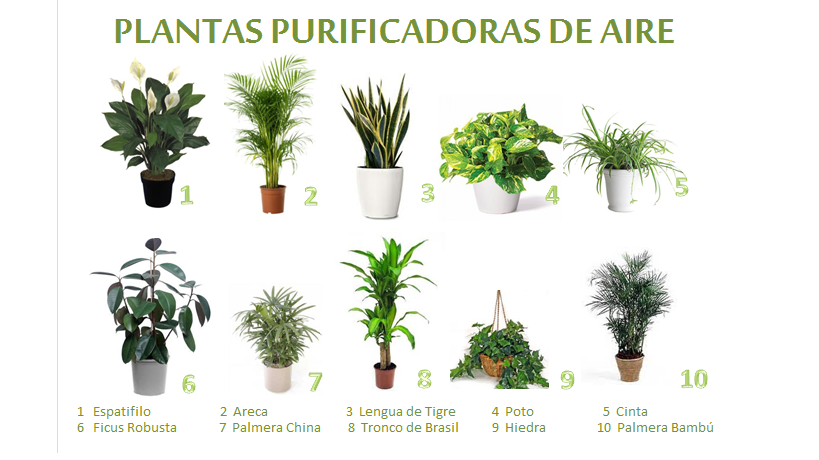 Plantas que limpian el aire de tu casa interflora - Plantas de interior tipos ...