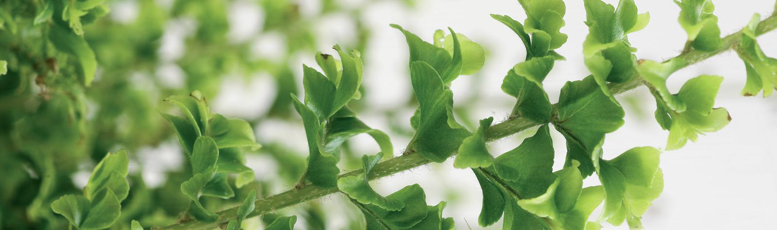 Plantas que limpian el aire de tu casa