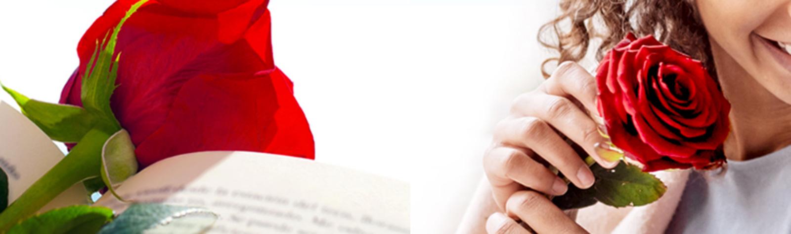 ¿Por qué una rosa y un libro?