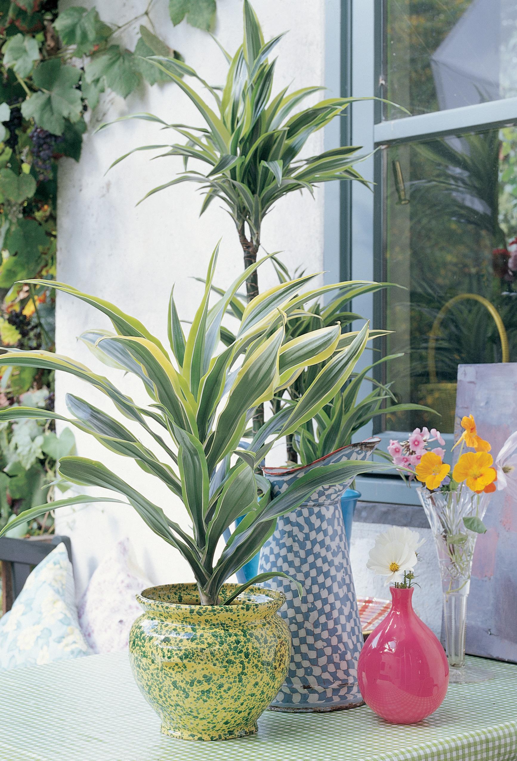 10 S Per Consejos Para Cuidar Tus Plantas De Interior Y