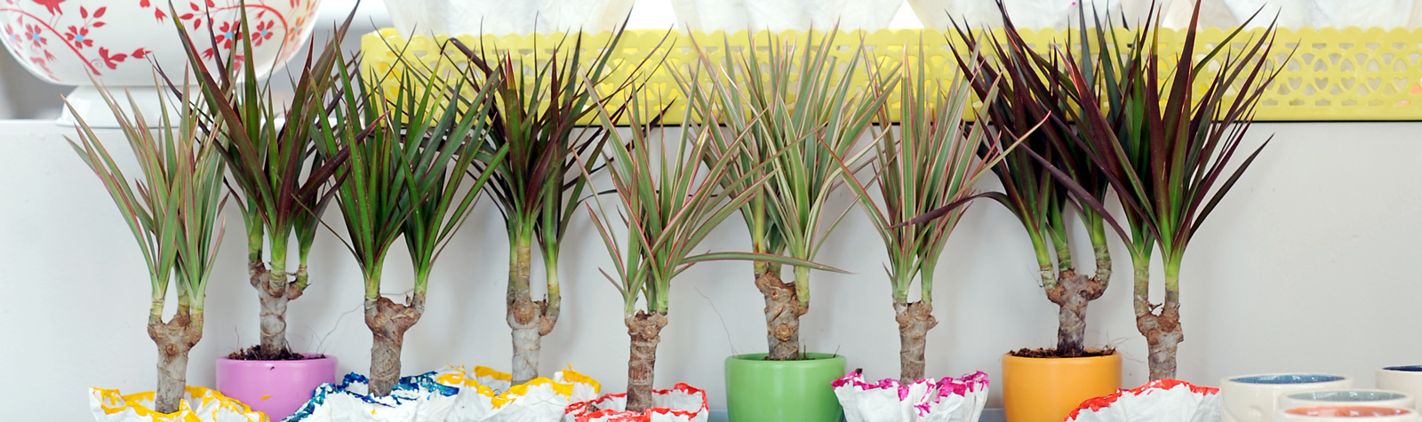 10 Súper Consejos para cuidar tus plantas de interior y exterior