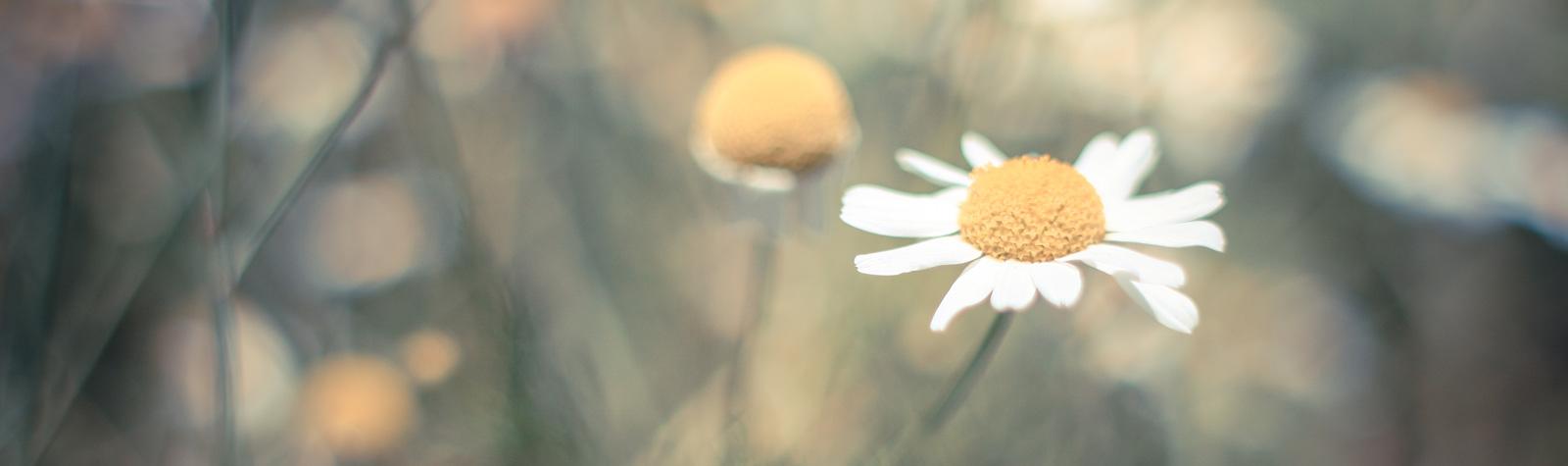 Historia de las flores