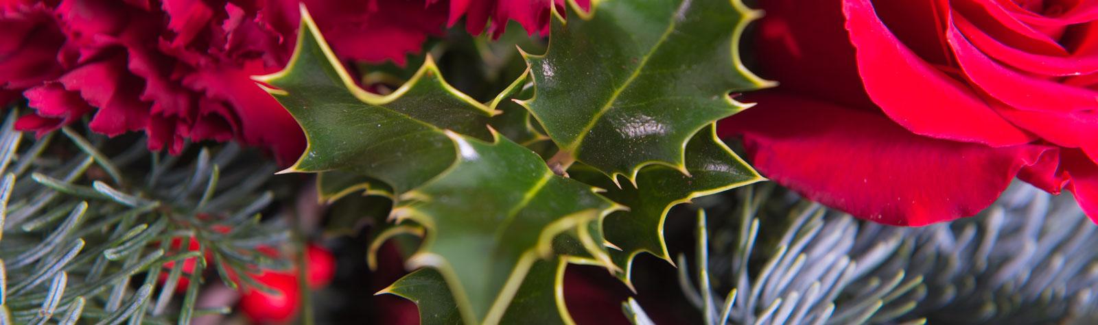 Acebo y muérdago: Las flores de la Navidad