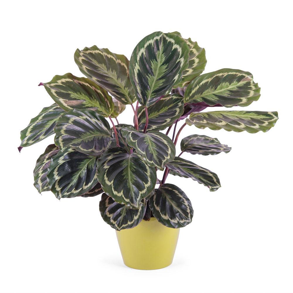 Diez plantas para regalar a un hombre interflora for Plantas y arbustos de exterior