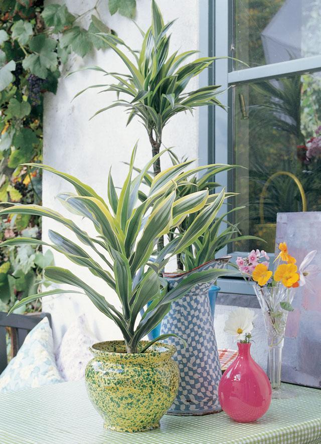 10 s per consejos para cuidar tus plantas de interior y - Plantas de exterior baratas ...
