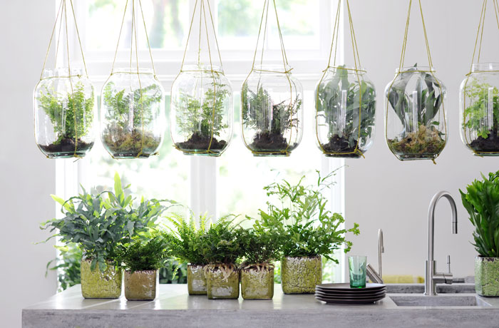 cuidados-plantas-interior