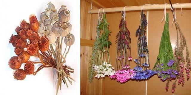 Obtener flores secas - Flores secas decoracion ...